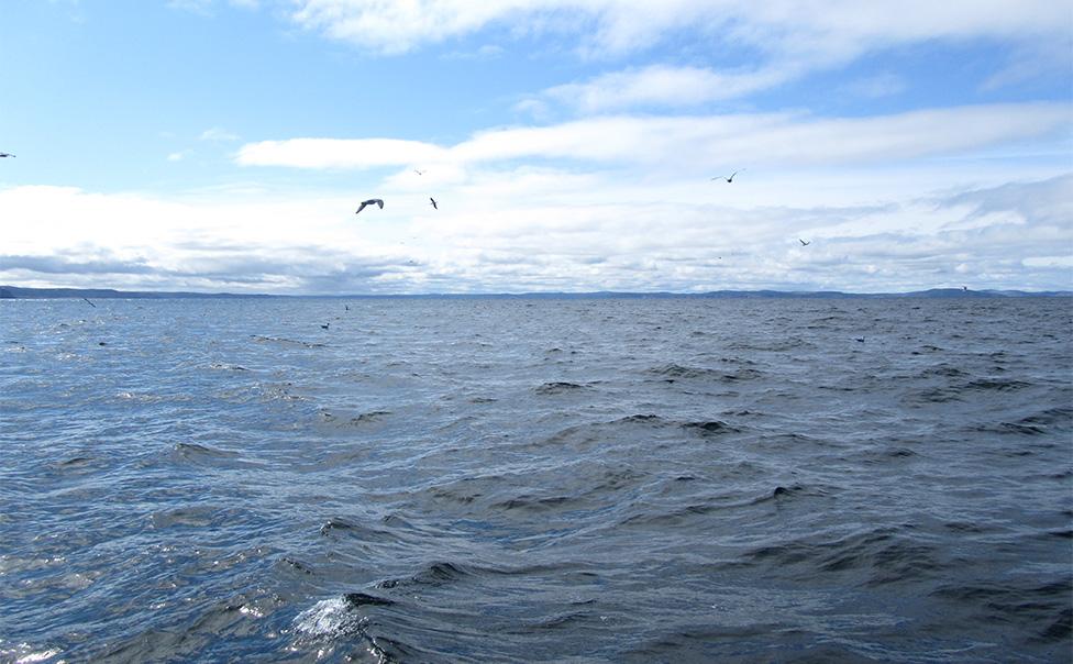 Eel Elver Fishery Opening - Southwest Coast