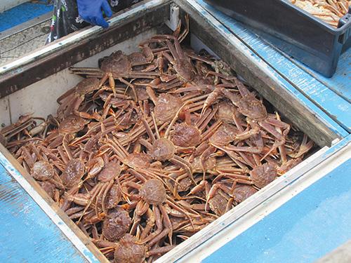crab-on-board---sheticamp