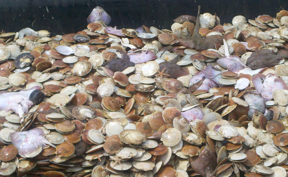 3PS Scallop Fishery Opening