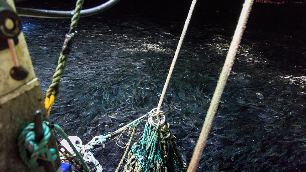 2J3KLPs Herring Integrated Fisheries Management Plan – 2015-2016