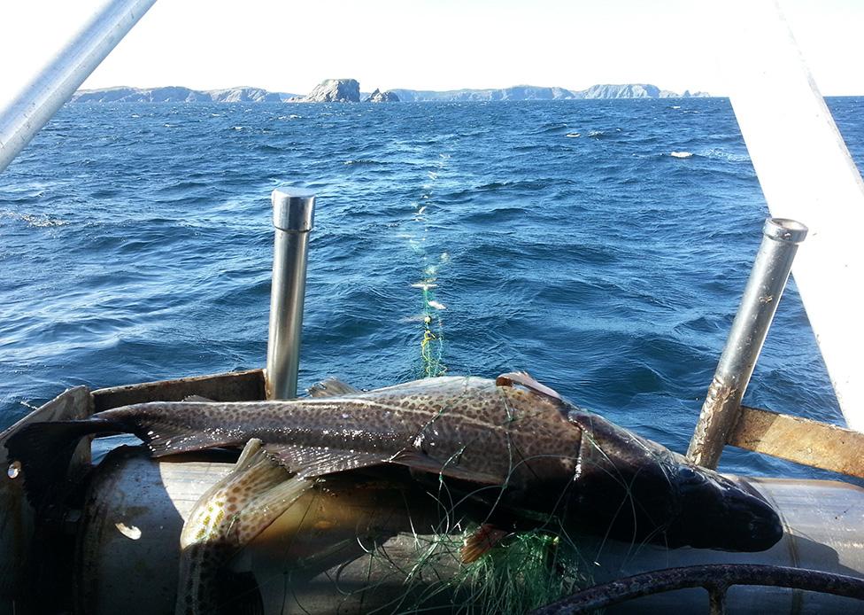 2013-fishery