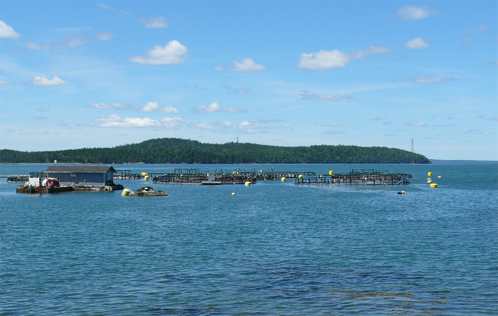 Funding Announced for N.B. Aquaculture Research