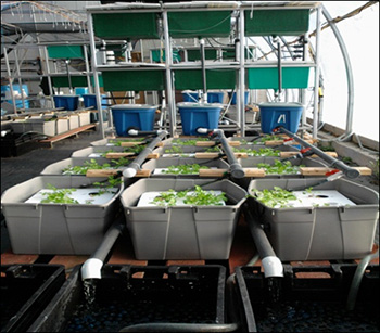 Aquaponics system designed by CASD research team (Photo credit: Cyr Couturier)