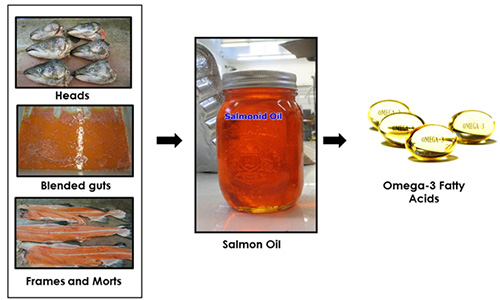 Omega-3 concentration from salmon byproducts.