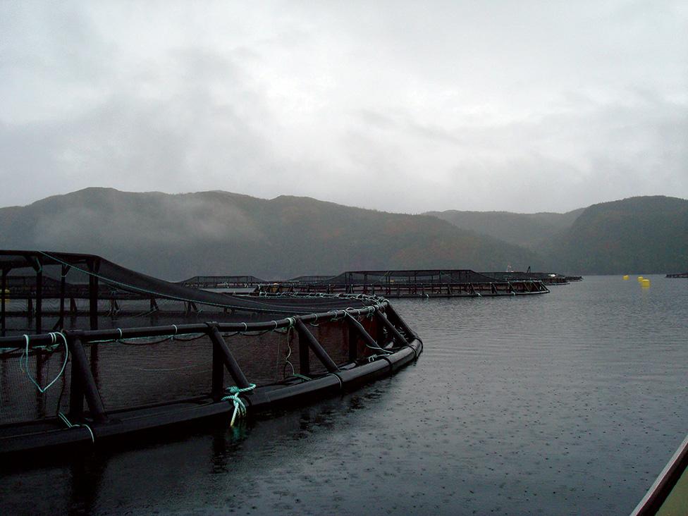 Nova Scotia Rolls Out Stricter Aquaculture Regulations