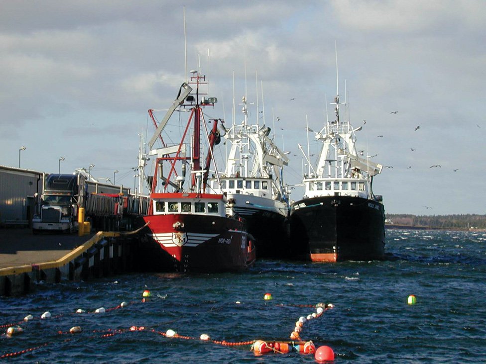 Seiner Groups Taking Herring Industry into Own Hands