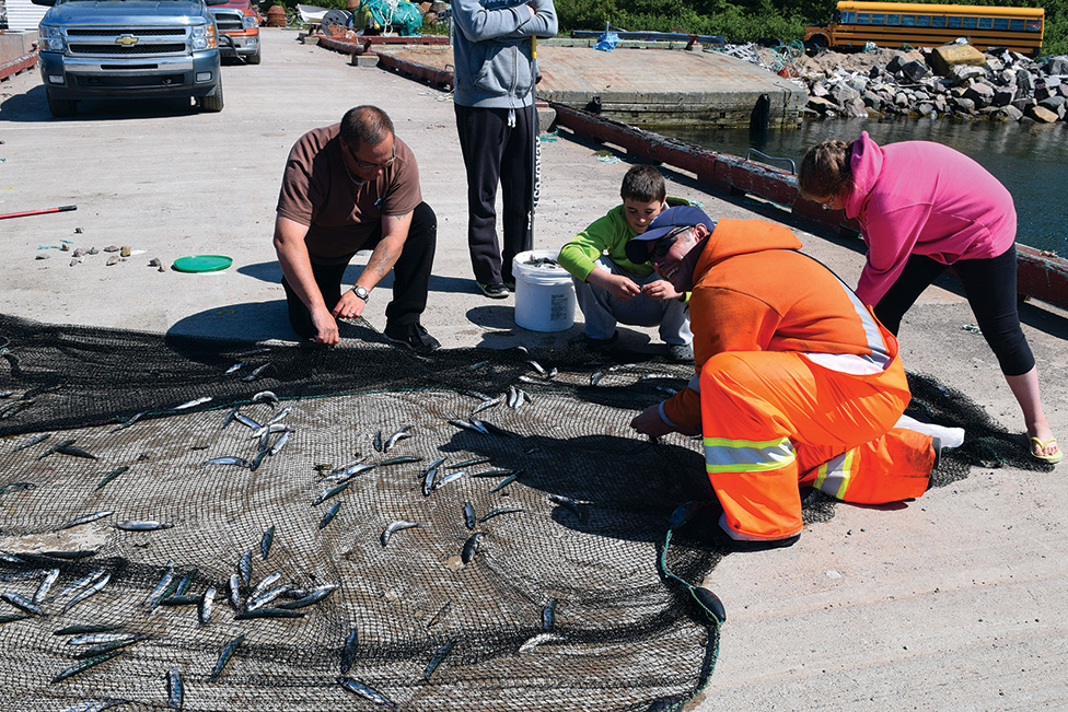 Sampling capelin in St. Lewis, Labrador. From left to right: Rene Poole, Cody Poole, Noah Poole, Rudy Poole, Maddison Chubbs. Courtesy of Rebecca Poole.