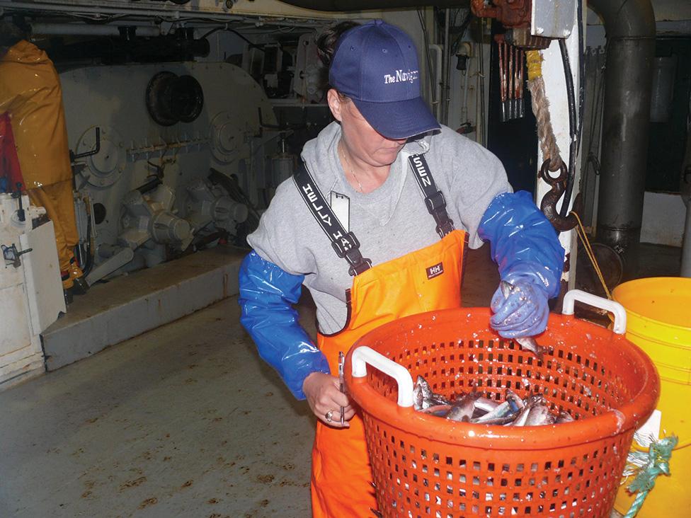 sally-(observer)-samples-herring
