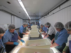 Process workers employed at Codroy Seafoods Inc.