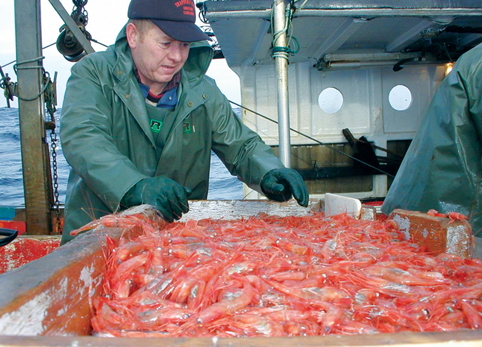Controversial LIFO Policy Under Review: Prominent Economist Says Offshore Shrimp Fishery Provides More Benefits to Province