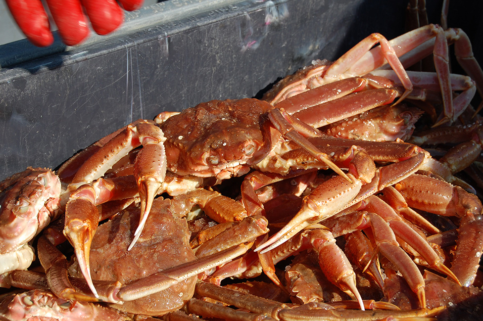 3K Fall Crab Meat Yield Project