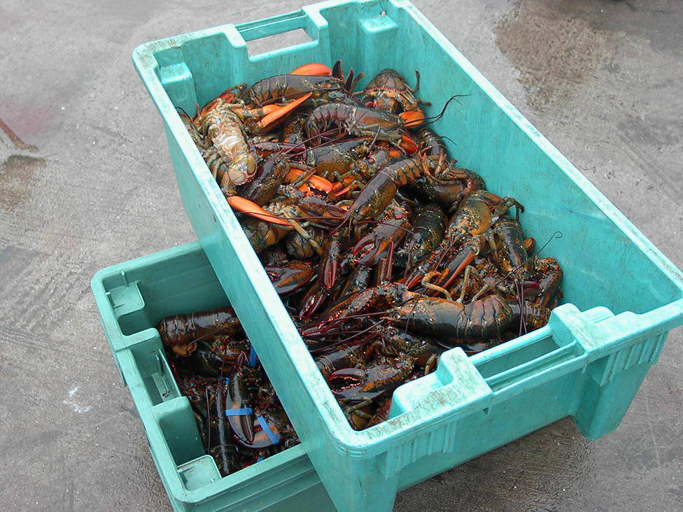 lobster-crate-2