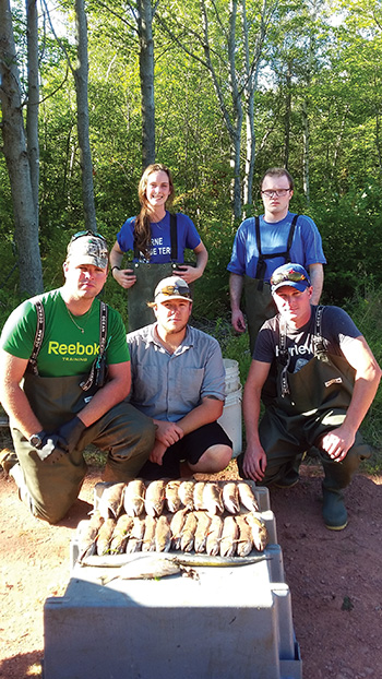 Dead fish recovered by volunteers after a major fish kill in the Little Miminegash River, near Roseville, Prince Edward Island, in August. P.E.I has been hit with at least three major fish kills so far this season, which is actually a relatively average number. Submitted photos.