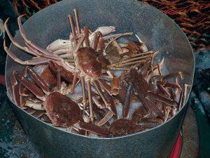crab-p1012030
