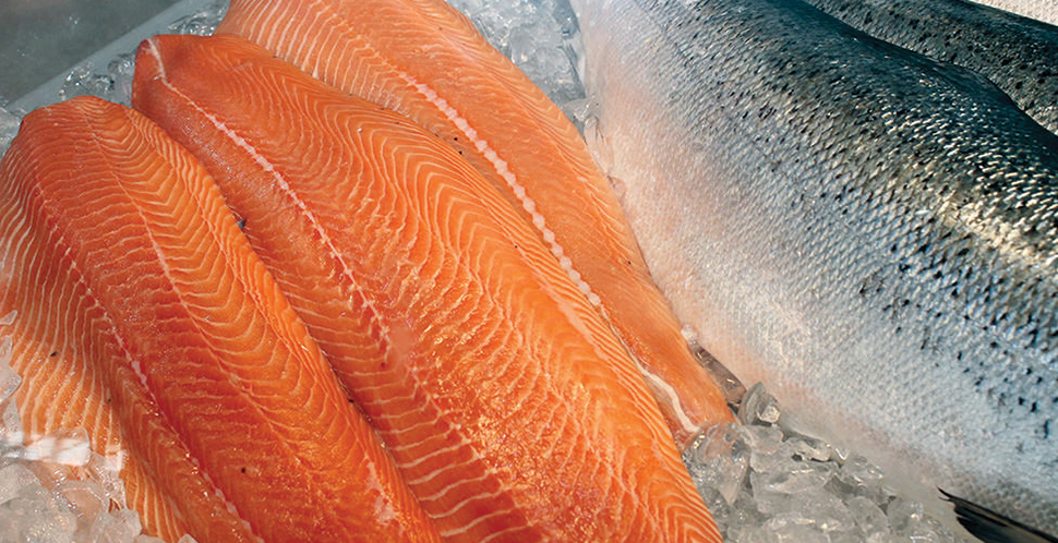 Federal Salmon Farming Audit Makes Eight Recommendations