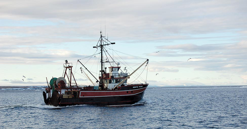 Shrimp Market Turmoil With High Prices in Newfoundland and Strike on West Coast