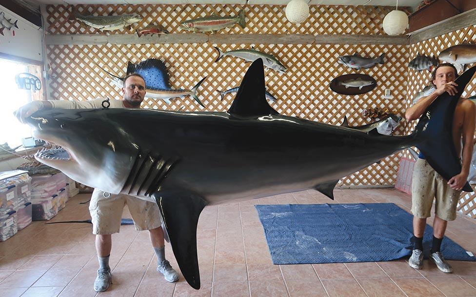 Organizers Hopeful Yarmouth Shark Scramble and Wedgeport Tuna Tournament will be a go