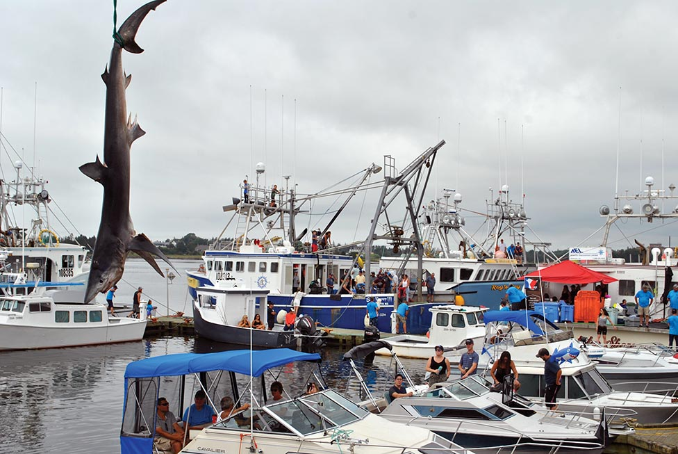 Yarmouth Shark Scramble Continues to Provide Valuable Scientific Data
