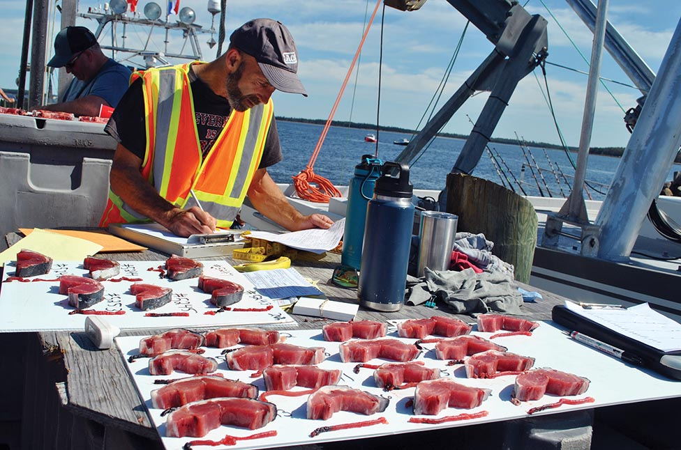 Wedgeport Tuna Tournament and Festival Back on Deck