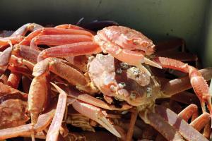 crab-IMG_2651